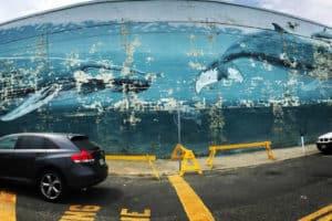Saying Goodbye to the Wildwood Whale Wall