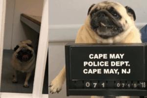 Cape May Dog Gets A MugShot