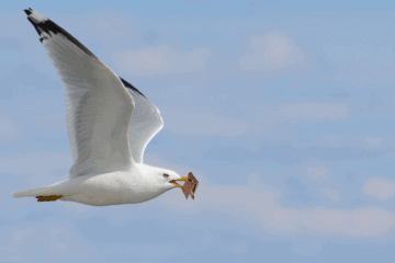 Seagull Steals Man's Wallet