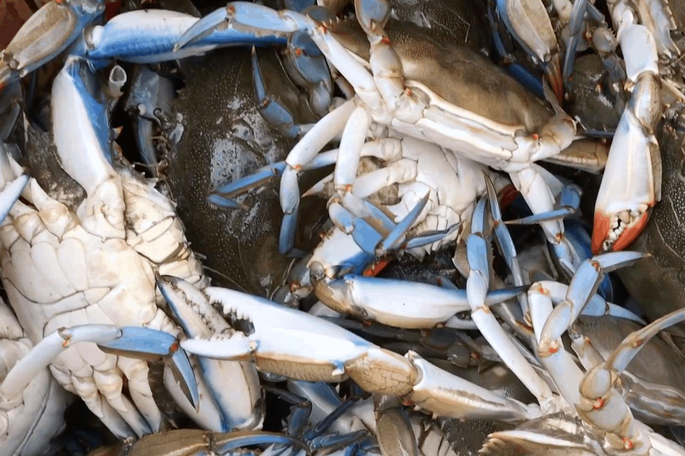 Crabbing In The Wildwoods