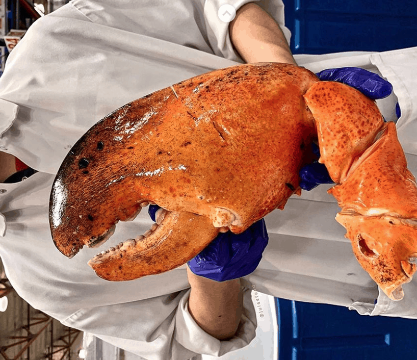 Costco Is Selling a GIGANTIC 3-Pound Lobster Claw