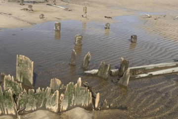 Old Whaling Pier UnEarthed In Cape May