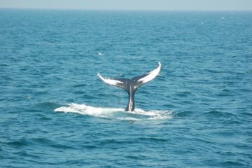 Humpback Whales Spotted Off The Coast of Cape May