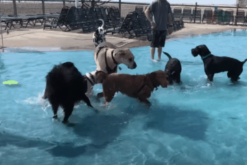 Take Your Dog To The Waterpark Day!