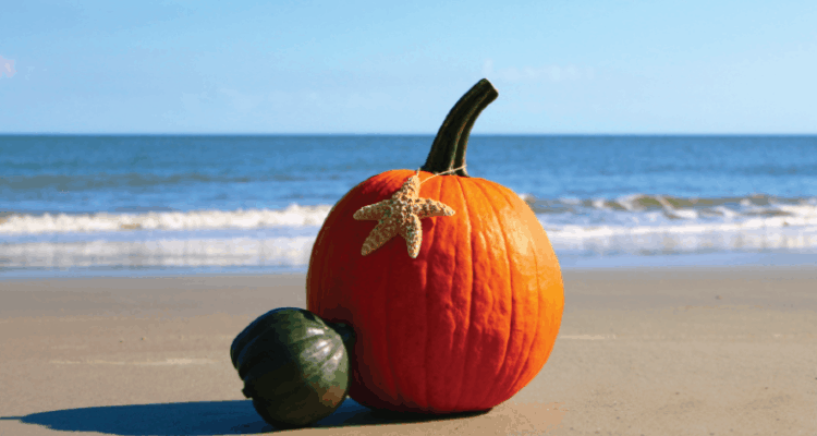 Things to Do In Cape May County In The Fall