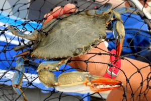 Crabbing in Wildwood 2021